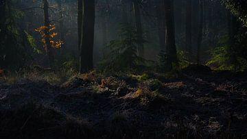 Schaduwen in het bos van Hugo Braun