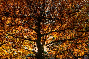 Herfstkleuren  sur Don Fonzarelli