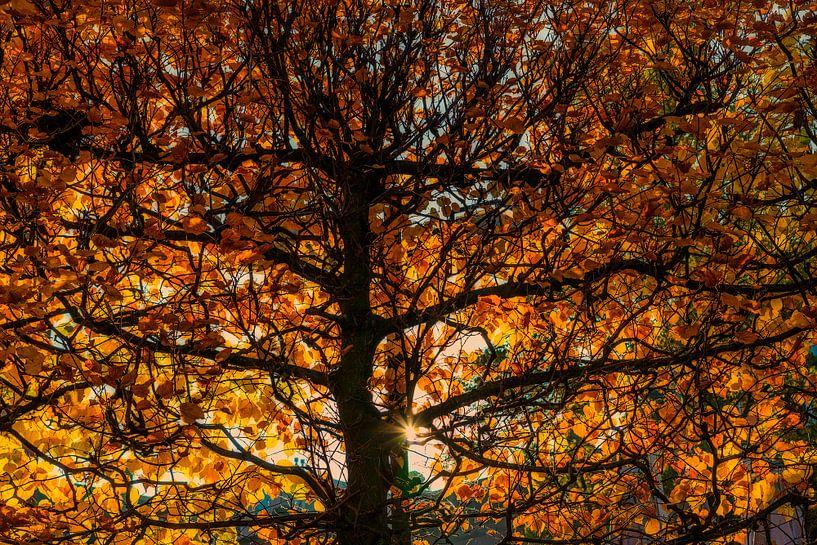 Herfstkleuren  van Don Fonzarelli