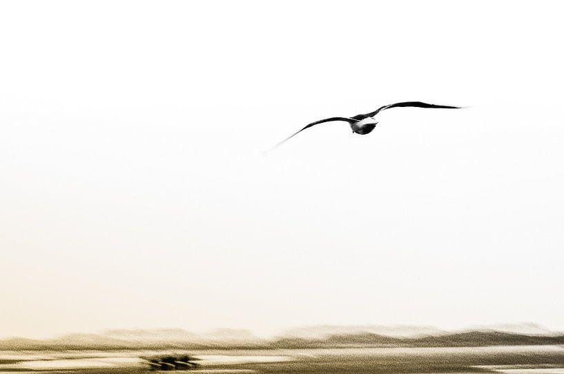 Flying high van Albert Wester Terschelling Photography