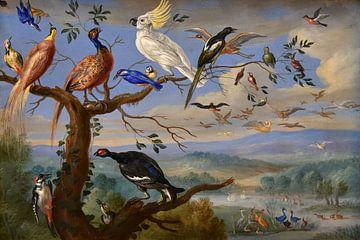 Exotische Vögel Brafa, Jan van Kessel