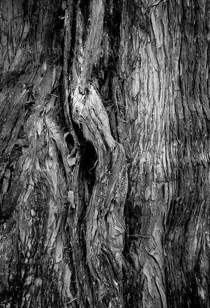 Boomschors in zwart-wit van Anne van de Beek