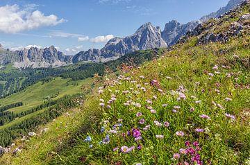 Alpen in bloei van Coen Weesjes