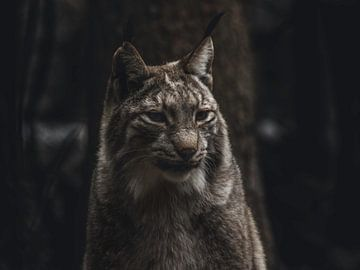 Lynx sur Lars Hoppe
