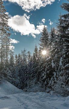 Winter Wonderland von Mariette Alders