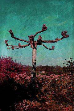 De grillige boom van Nicky`s Prints
