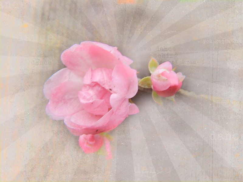 Rosen Collage rosa van Deern vun Diek