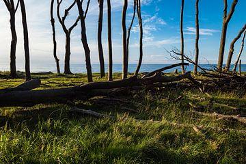 Küstenwald an der Ostsee bei Nienhagen. von Rico Ködder