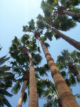 Palmen in de lucht