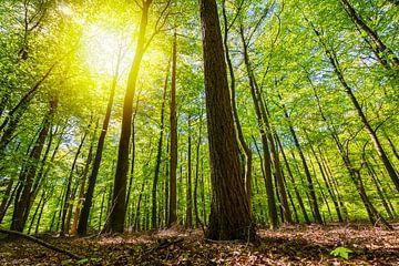 Zie door de bomen het bos niet meer van