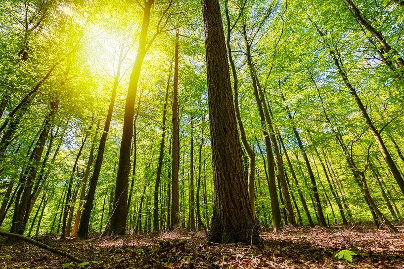 Zie door de bomen het bos niet meer van Sander Meertins