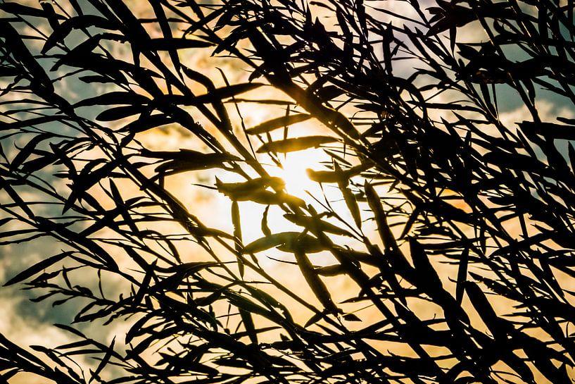 Gräser vor Sonne van Holger Debek