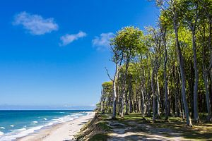 Coastal forest on shore of the Baltic Sea