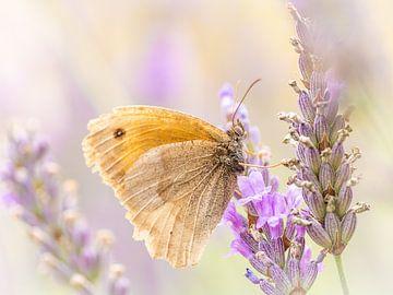 Vlinder op lavendel van Inge Lubbers