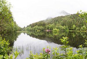 Schottische Natur von Sharona Sprong