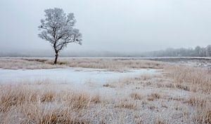Berijpte bomen in winters landschap van