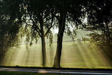 Zonnestralen door de bomen sur Dirk van Egmond
