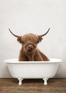Drôle de Highlander écossais