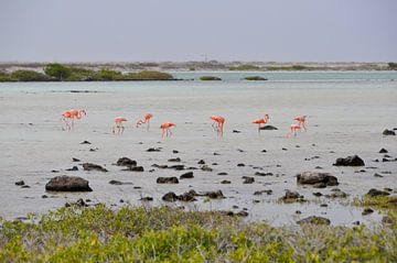 Flamingo's op Bonaire van Myrthe Visser-Wind