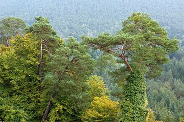 green beauty van Bernd Hoyen