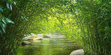 bamboebos met rivier van Dörte Stiller