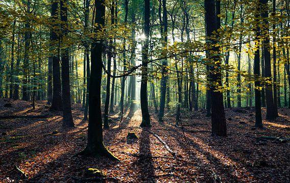 Een dag in het leven van een boom van Joris Pannemans - Loris Photography