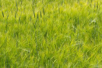 Green Green Grass von Karin van Hengel