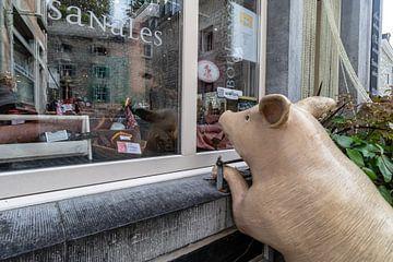 DURBUY Varken voor slagerij van Paul Veen