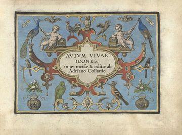 Titelkarte für Avium vivae Icones von Adriaen Collaert, 1570 - 1616