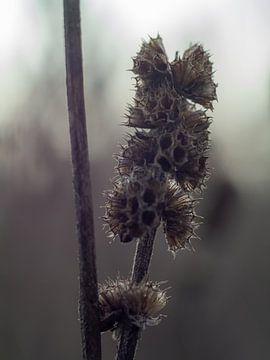 Droogbloemen van Martijn Wit