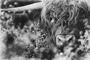 Zwart wit versie van de Schotse Hooglander van Caroline van der Vecht