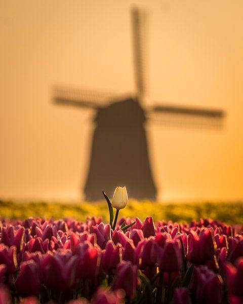 Uitstekend wit voor oude windmolen. von Dennis Werkman