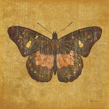 Oker vlinder, Katie Pertiet van Wild Apple