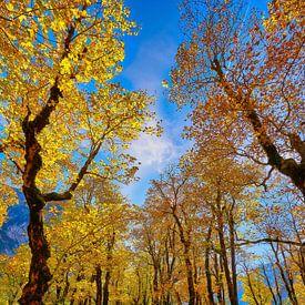 Großer Ahornboden Herbst von Einhorn Fotografie