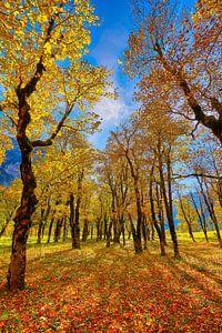 Großer Ahornboden Herbst