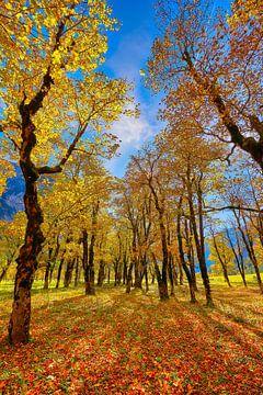 Grote ahorngrond herfst van Einhorn Fotografie