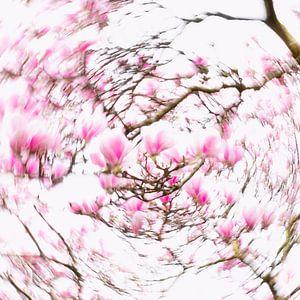 Dazzling Magnolia's von