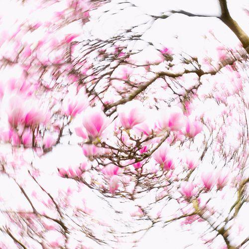 Dazzling Magnolia's von Katja Waltmans