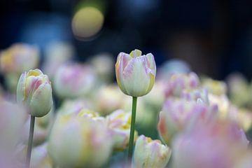 tulpen in pasteltint 2 van Leontien van der Willik-de Jonge
