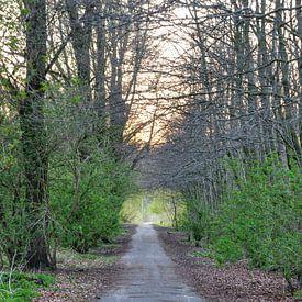 wandeling in het bos van Heleen de Silva