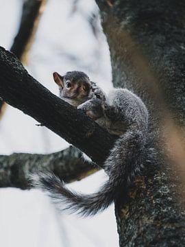 Eichhörnchen im Baum von Leo van Gemmern
