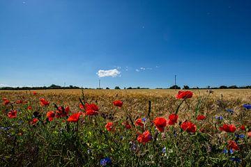 roter Klatschmohn und Kornblumen im Gerstenfeld von GH Foto & Artdesign