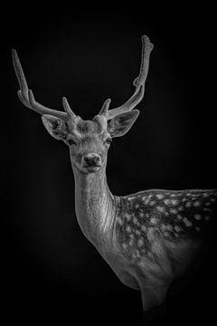 Hirsch: Porträt eines Hirsches mit schönem Geweih in schwarz-weiß von Marjolein van Middelkoop