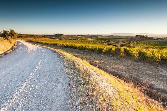 Wijnranken in de Toscaanse heuvels van Damien Franscoise
