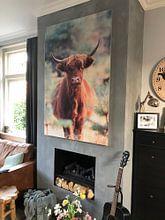 Klantfoto: Nieuwsgierige schotse hooglander koe portret van Bobsphotography, op print op doek