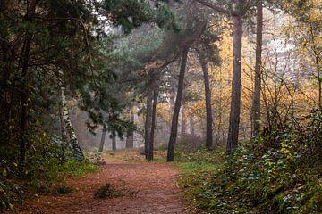Path Of Trees van William Mevissen