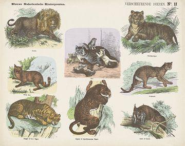 Verscheurende dieren van Monogrammist A.K., 1865 - 1875