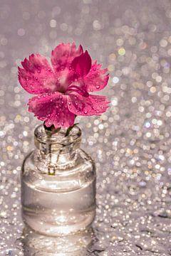 Roze Anjerbloem met glitter achtergrond van Dafne Vos