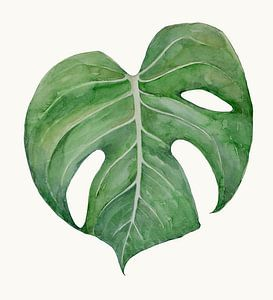Philodendron Monstera 2 van Studio Heyki