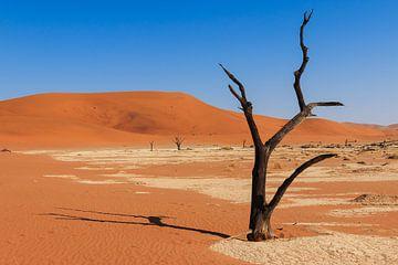 Eenzame boom Deadvlei vallei Namibie van P Design